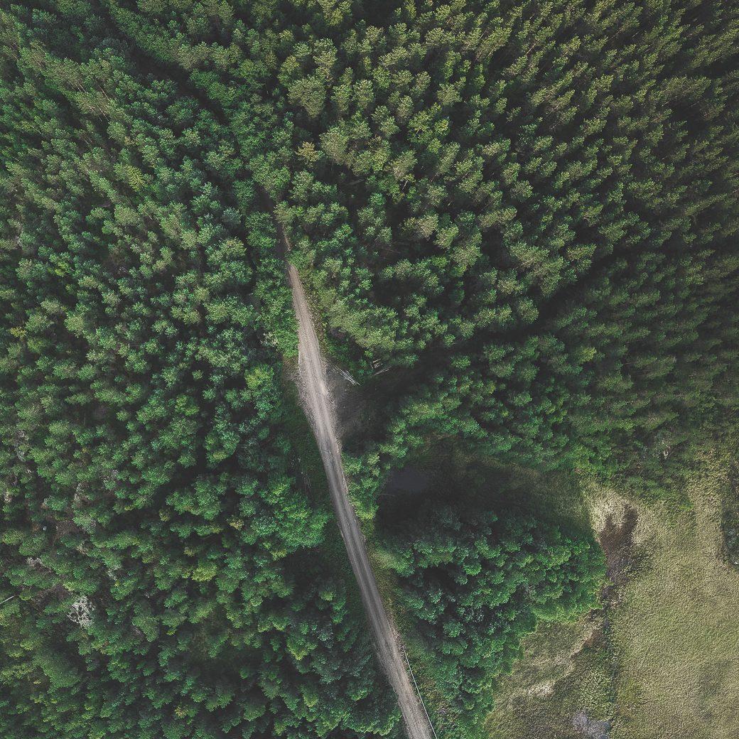 Kuva metsästä ylhäältä otettuna